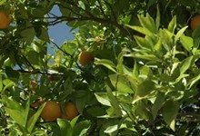 citricos2mini