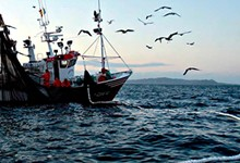 PescaMini