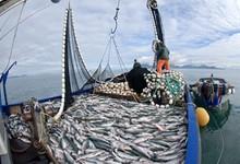 Pesca2Mini