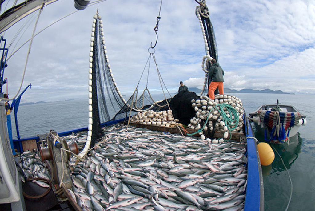 Pesca2Grande