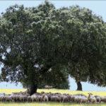 Clara Aguilera y Nacho Sánchez Amor visitan Extremadura con la Comisión de Agricultura de la Eurocámara