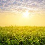 Pregunta parlamentaria sobre el retraso de la entrada en vigor del Reglamento para la producción ecológica (UE)