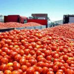 Pregunta parlamentaria sobre el fraude en la indicación de origen de productos hortofrutícolas marroquíes